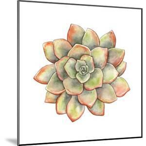 Watercolor Succulent, Vector Illustration in Vintage Style. by Nikiparonak