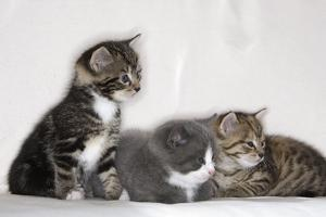 Couch, Cats, Young, Sitting, Lying, Side by Side, Observes, Curiously, Sidelong Glance, Animals by Nikky