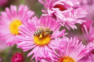 Bee, Blossoms, Medium Close-Up by Nikky Maier