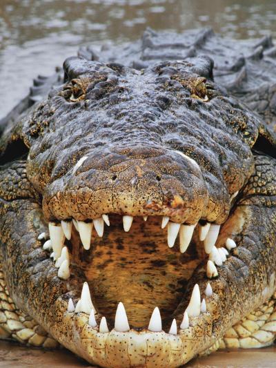 Nile Crocodile, Crocodylus Niloticus, Okavango Delta, Botswana-Frans Lanting-Photographic Print