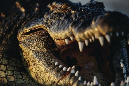 Nile Crocodile with Open Mouth-Paul Souders-Photographic Print
