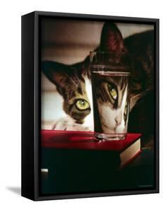 Cat Peering Into Glass Reflects Its Image in Reverse, Creating Perfect Example of Light Refraction by Nina Leen