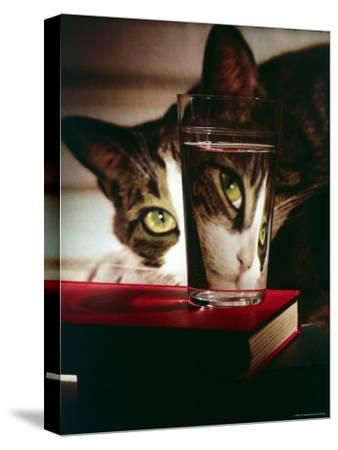 Cat Peering Into Glass Reflects Its Image in Reverse, Creating Perfect Example of Light Refraction
