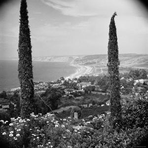 Garden Overlooking the California Pacific Coastline by Nina Leen