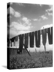Laundry Hanging Out to Dry by Nina Leen