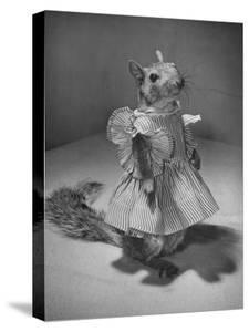 Squirrel Wearing a Baby Doll's Dress by Nina Leen