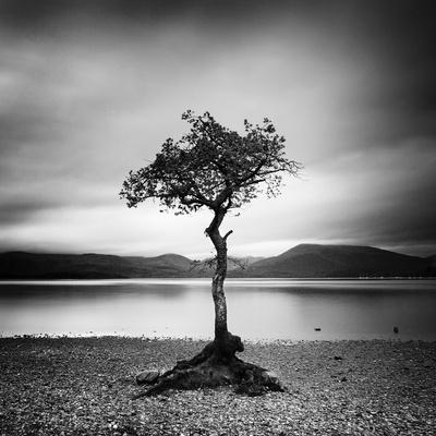 Millarrochy Tree
