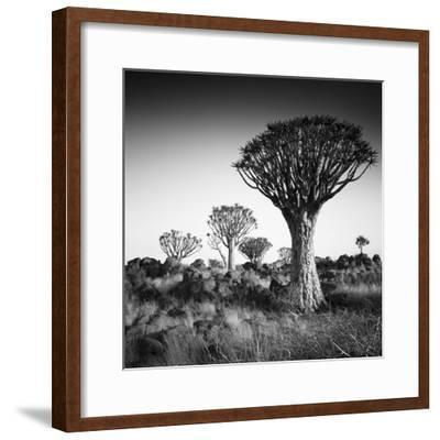 Namibia Quiver Trees