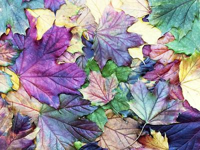 Special Colored Autumn Leaves