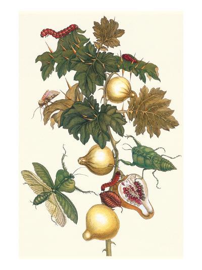 Nipple Fruit with a Leaf Mantus-Maria Sibylla Merian-Art Print