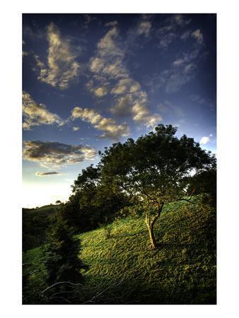 Sunset Green True Blue Sky