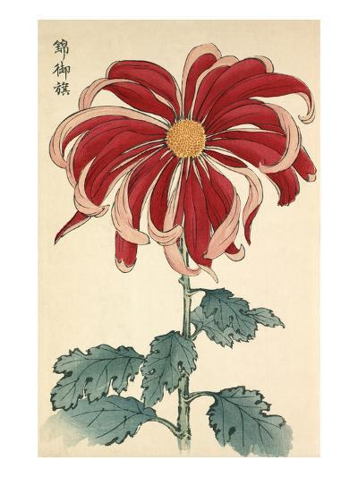 Nishiki no Mihata-Keikwa Hasegawa-Giclee Print