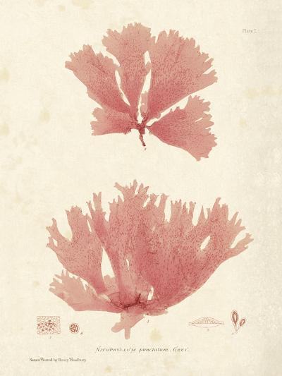 Nitophyllum greville-Henry Bradbury-Art Print