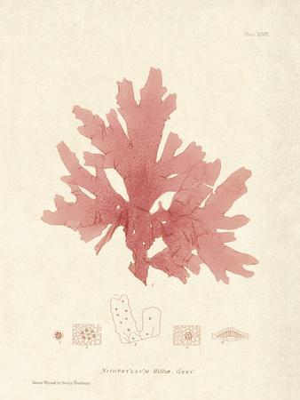 https://imgc.artprintimages.com/img/print/nitophyllum-hilliae_u-l-f90bls0.jpg?p=0