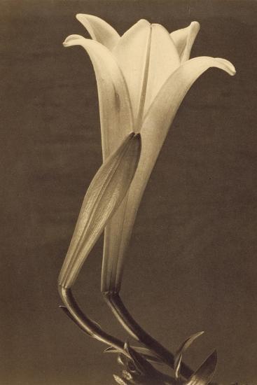 No. 1 by Tina Modotti--Photographic Print