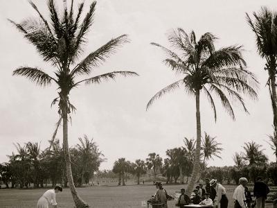No. 1 Tee, Golf Links, Palm Beach, Fla.--Photo