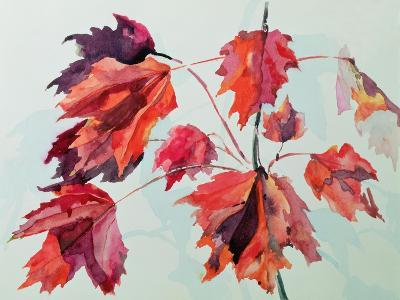 No.24 Autumn Maple Leaves-Izabella Godlewska de Aranda-Giclee Print