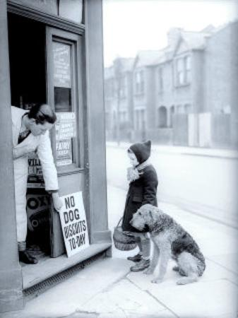 No Dog Biscuits Today