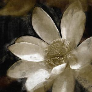 Bronze Lily I by Noah Bay