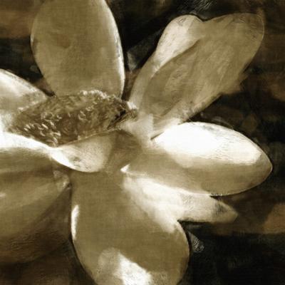 Bronze Lily III by Noah Bay