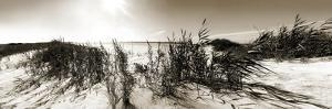 The Wind in the Dunes I by Noah Bay