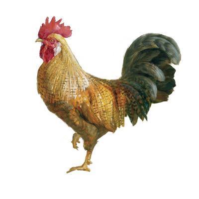 https://imgc.artprintimages.com/img/print/noble-rooster-ii-on-white_u-l-q1az1650.jpg?p=0