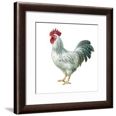 Noble Rooster IV on White-Danhui Nai-Framed Art Print