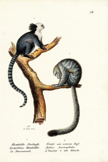 Nocturnal Monkey, 1824-Karl Joseph Brodtmann-Giclee Print