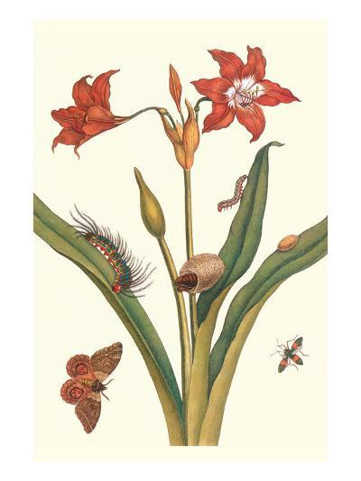 Nocturnal Moth Caterpillar on a Barbados Lilly and a Coreidae Bug-Maria Sibylla Merian-Art Print