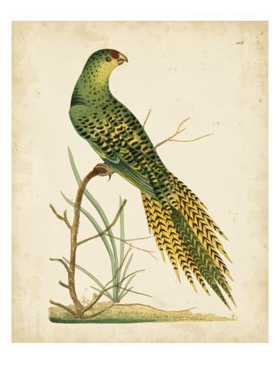 Nodder Tropical Bird IV-Frederick P^ Nodder-Art Print