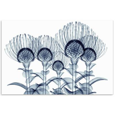 Nodding Pincushions - Free Floating Tempered Glass Panel Graphic Wall Art