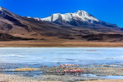 Flamingoes in Laguna Verde ,Bolivia