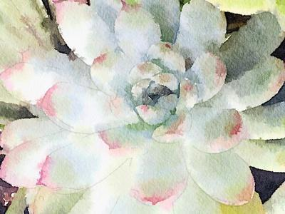 Watercolor Succulent