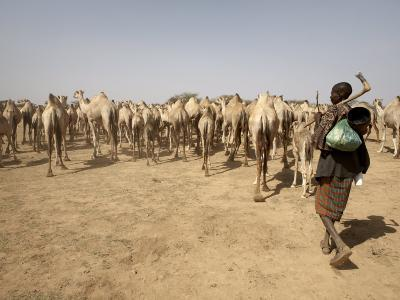 Nomadic Camel Herders Lead their Herd to a Watering Hole in Rural Somaliland, Northern Somalia-Mcconnell Andrew-Photographic Print
