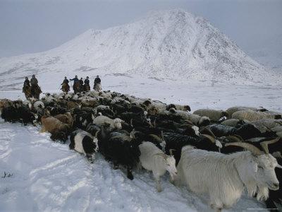https://imgc.artprintimages.com/img/print/nomadic-family-crosses-utreg-pass-enroute-to-winter-pastures_u-l-p4sblw0.jpg?p=0