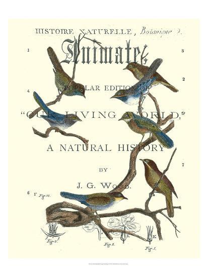 Non Embellish Vintage Ornithology II-Vision Studio-Art Print