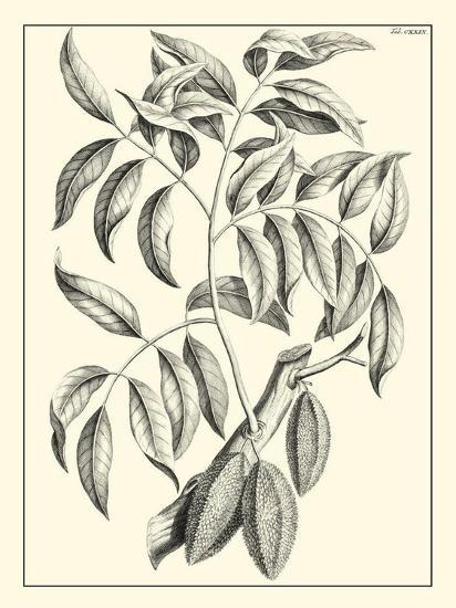 Non-Embellished Antique Foliage III--Art Print