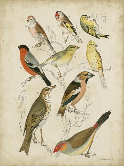 Non-Embellished Avian Gathering II-G^ Lubbert-Art Print