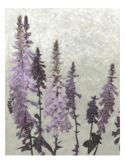 Non-Embellished Foxgloves II--Art Print
