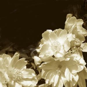 Non-Embellished Sepia Peonies II