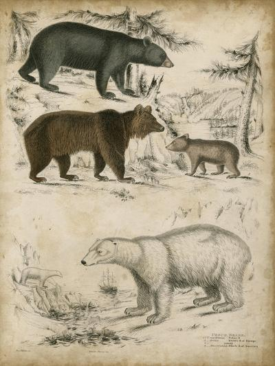 Non-Embellished Species of Bear--Art Print