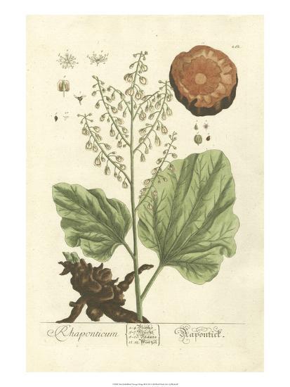 Non-Embellished Vintage Foliage III-Blackwell-Art Print