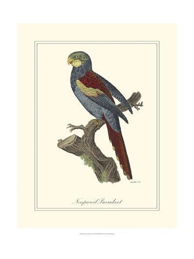 Nonpareil Parrakeet-George Edwards-Art Print