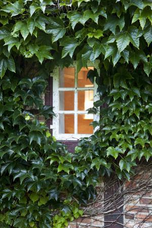 House, Detail, Window, Covered by Nora Frei