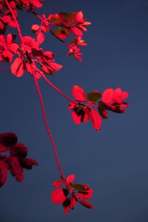 Outside, sky, night, branch