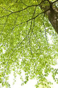 Tree, Forest, Leaves, Plants by Nora Frei