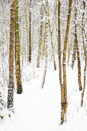 Tree, plant, cold, snow