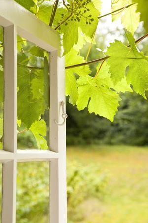 Window, Open, Garden