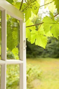 Window, Open, Garden by Nora Frei