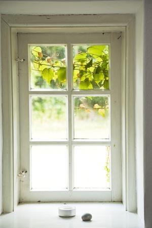 Window, Vine Leaves, Transom Window, Plants